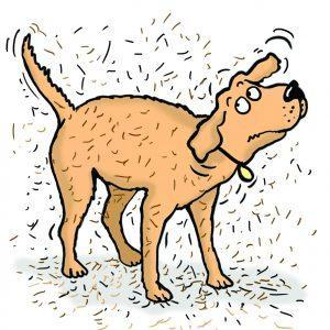 Dog shaking loose hairs from body