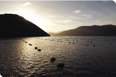 Mussel farm in New Zealand