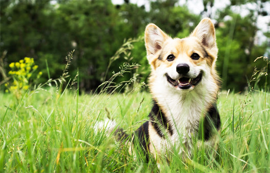 happy dog standing in tall grass