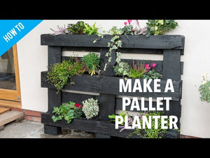 Using an upcycled pallet, Katie Rushworth shows you how to make a simple and effective pallet planter, perfect for small plants like hellebore, euonymus, ...