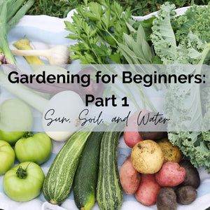 Gardening for Beginners: How to Start