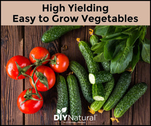 Want to garden BIG in a SMALL space? These 4 easy vegetables to grow are perfect