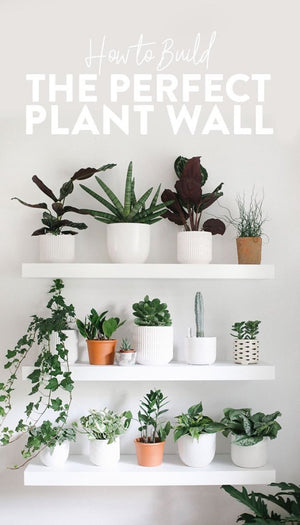 Wonderful Plant Wall Shelf