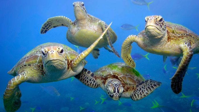 Switch to Metal Straws - Stop Killing our Marine life with Plastic Straws