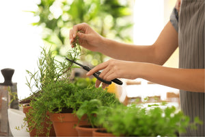 Learning the best and easiest way on how to dry herbs will not only help you to fill your pantry with some gardening freshness but will help you to create dishes that are even more of your own.