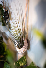Load image into Gallery viewer, Macrame air plant holder