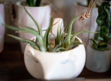 Load image into Gallery viewer, Tillandsia-Air plants
