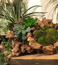 Load image into Gallery viewer, Tumbled Grapewood w/Artificial Moss