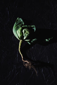 Cabbage and Roots - Claire Gunn