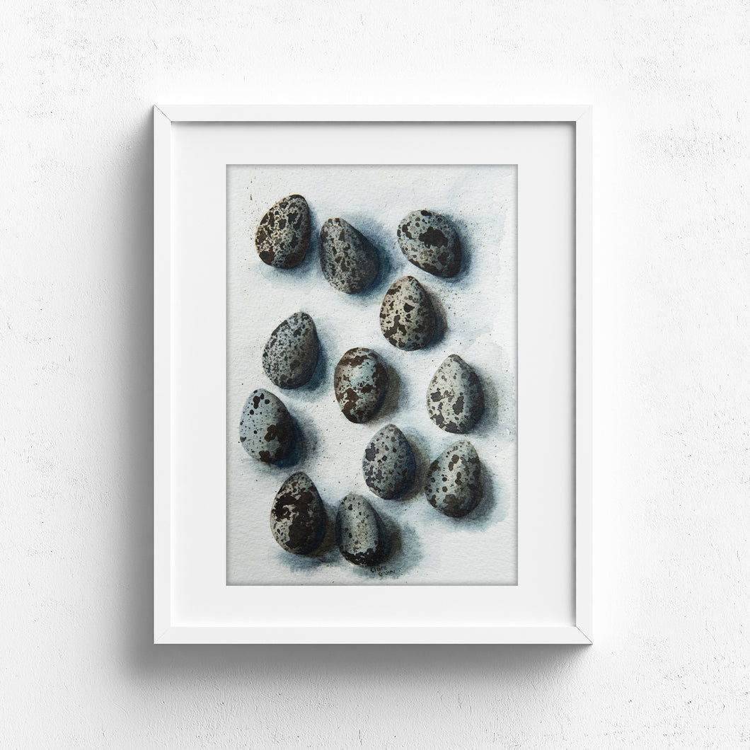 A dozen quail eggs and shadows
