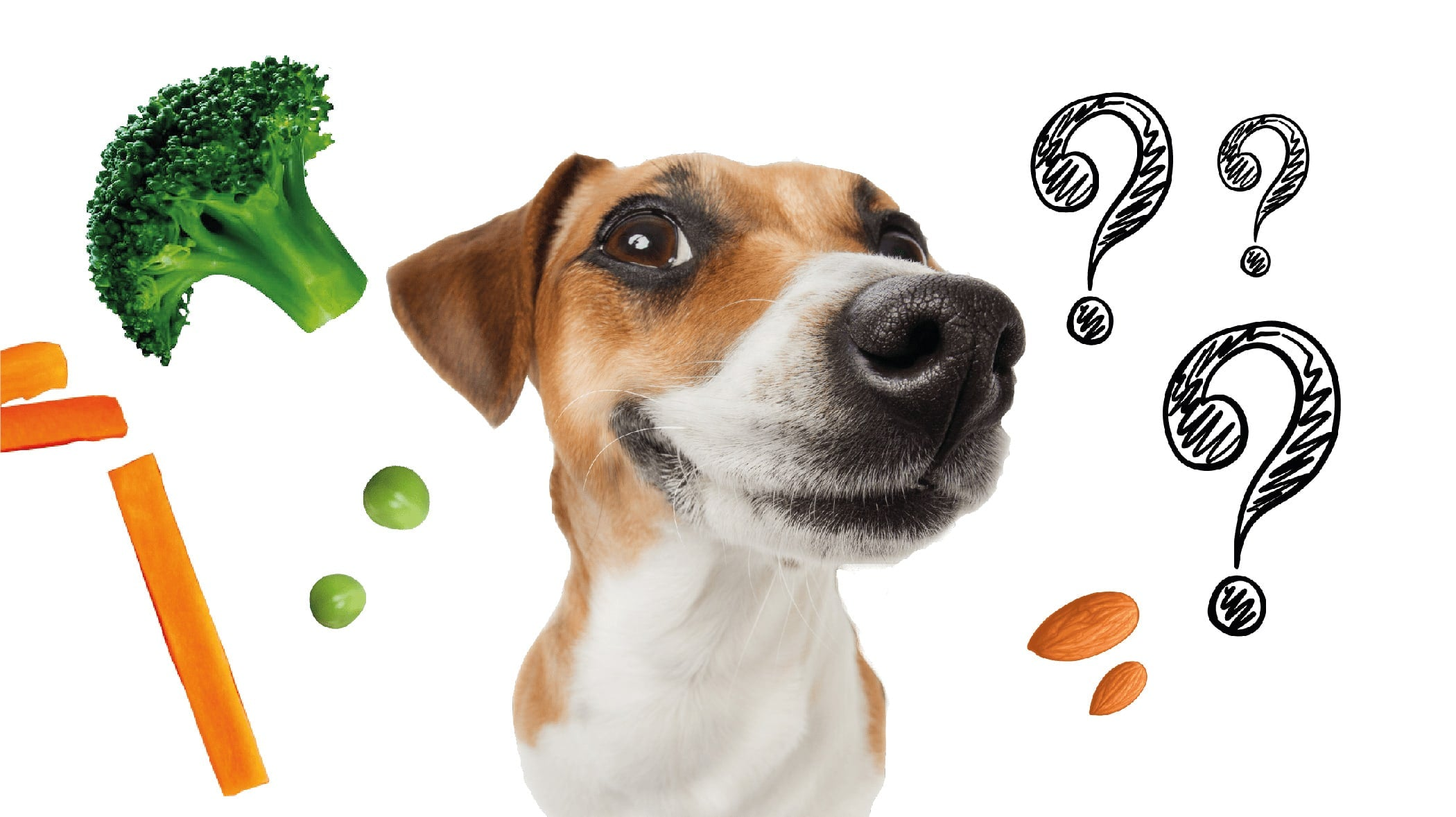Image of cute dog asking Why Cooked Pet Food?