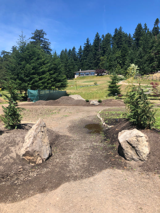 Tea Farm Update June 16, 2019