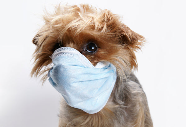 How To Protect Your Pup from Harmful Germs