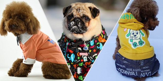 Fashion Trends For Dogs