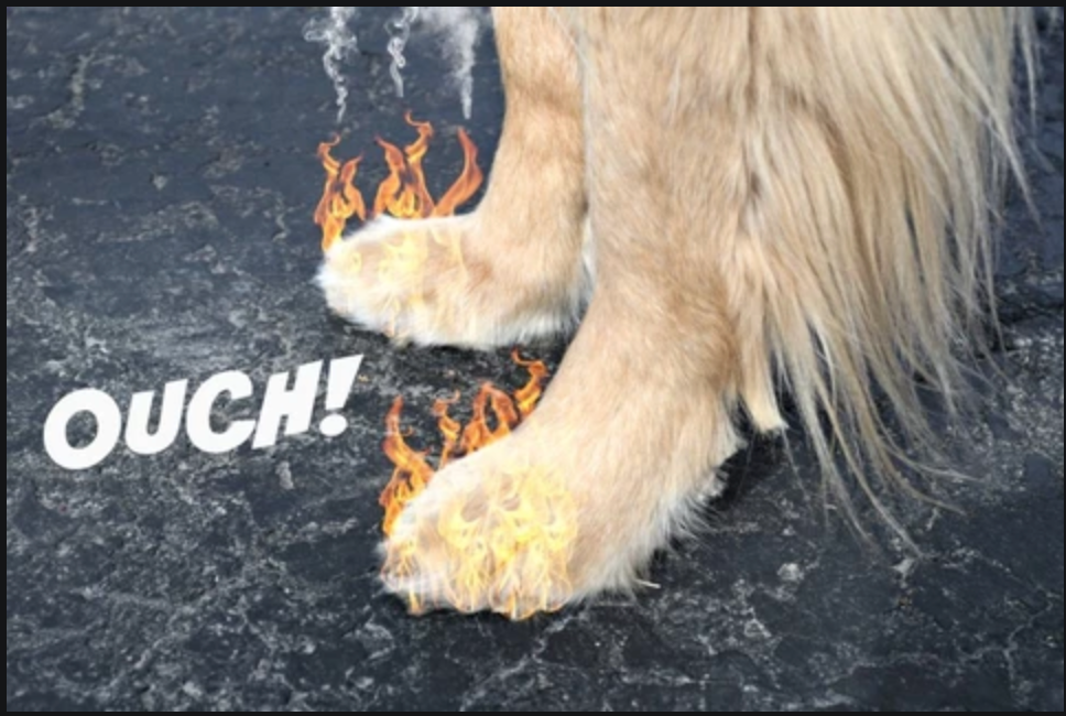 How to Protect Your Dog's Feet From Hot Pavement
