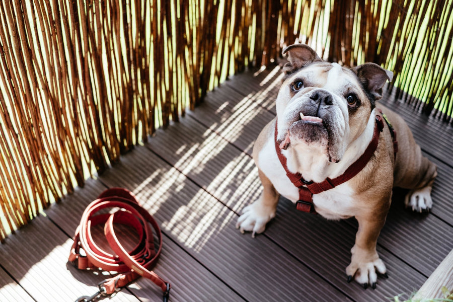 7 Super Cool and Essential Dog Walking Accessories to Up Your Strolls and Protect your Pup