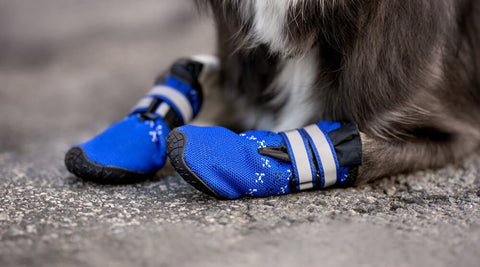 Dog's boots