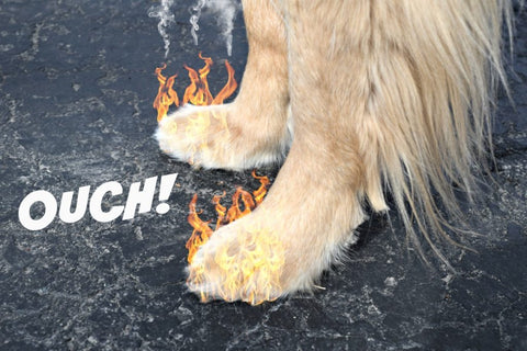 8 Tips For Protecting dog paws from hot pavement (cute and safe)