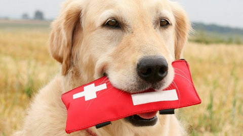 Dog's first aid kit