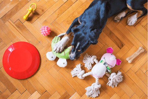puppy playing with toys
