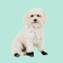 Load image into Gallery viewer, Walkee Paws Liner Socks - for extra paw protection