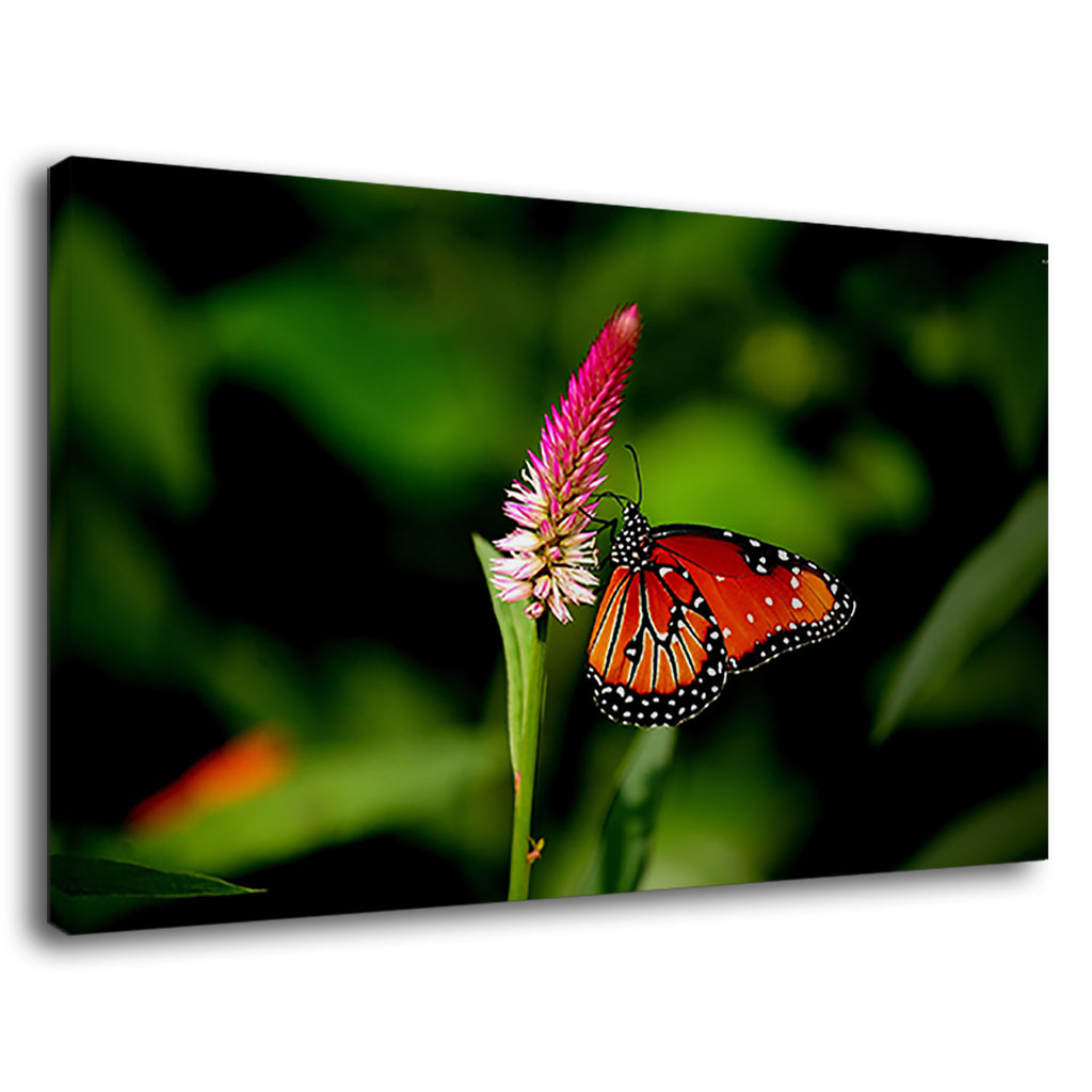 Orange Butterfly Animal Insect Flowers Nature