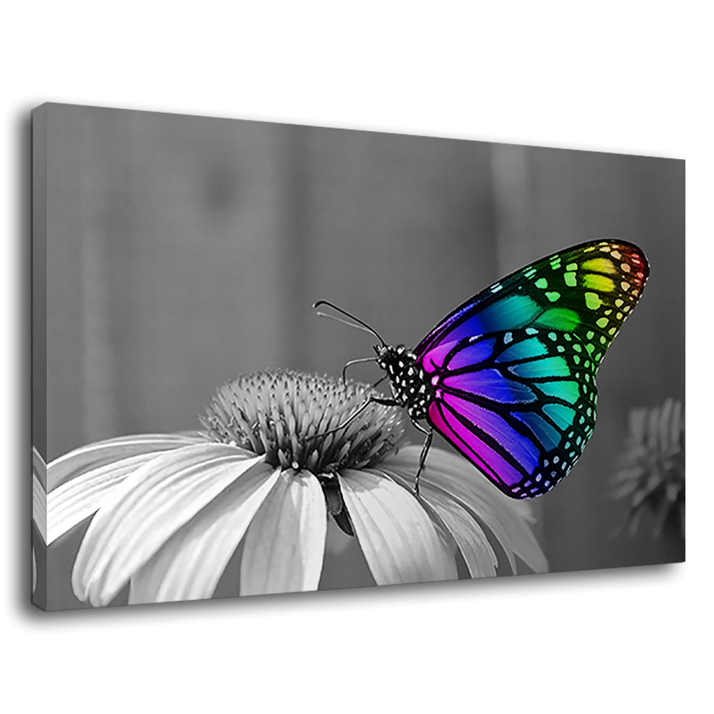Rainbow Butterfly With Colourful Wing Shine