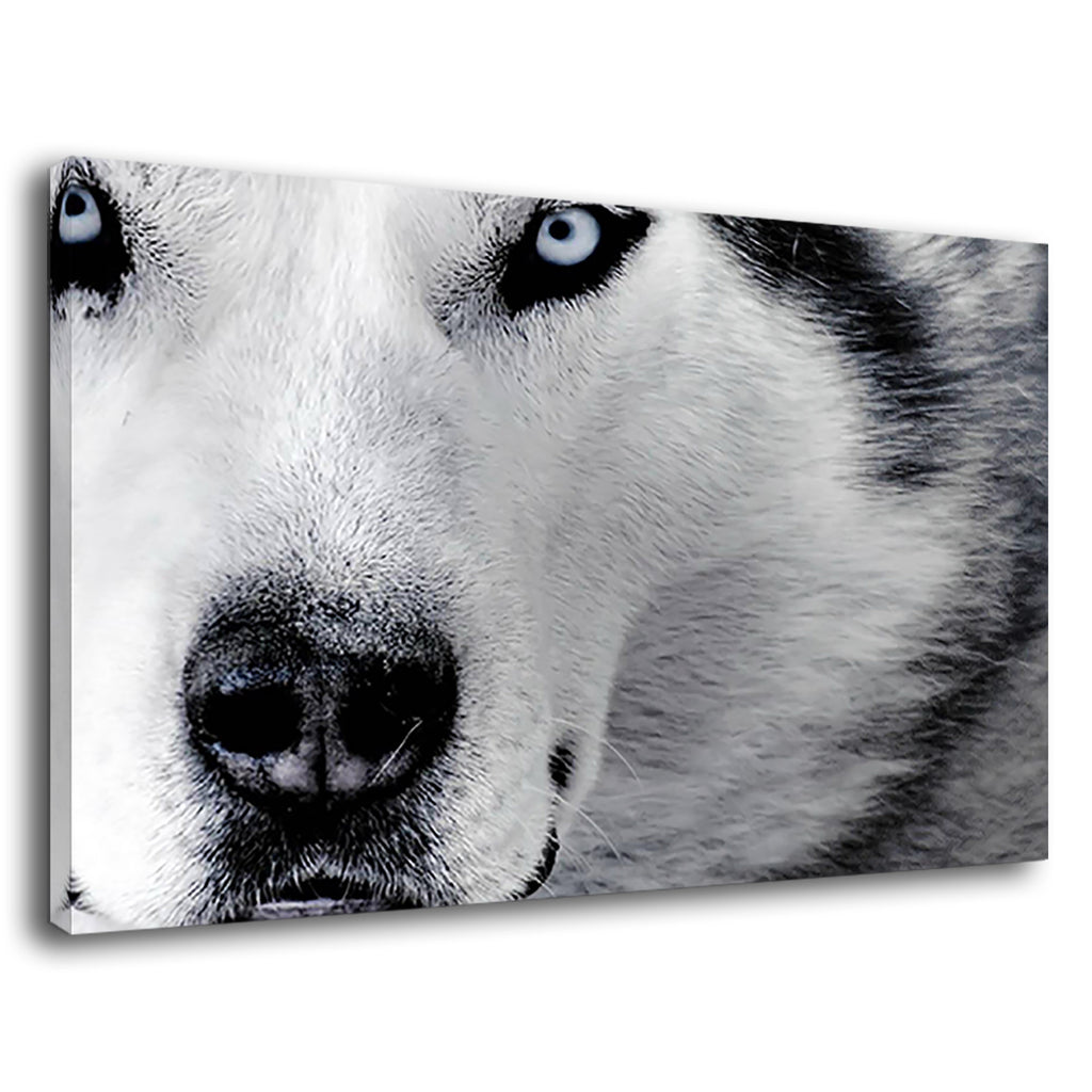 White Wolf With Cold Ice Eyes For Living Room