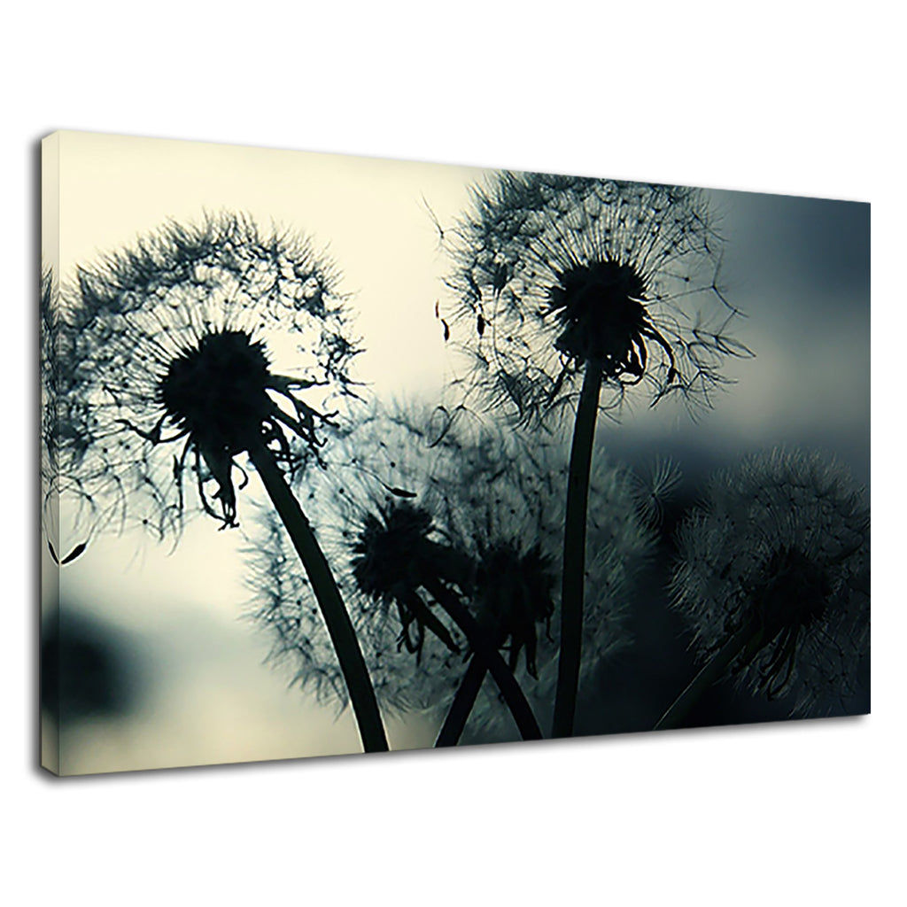 Dandelions In The Wind Peaceful Photography Dream