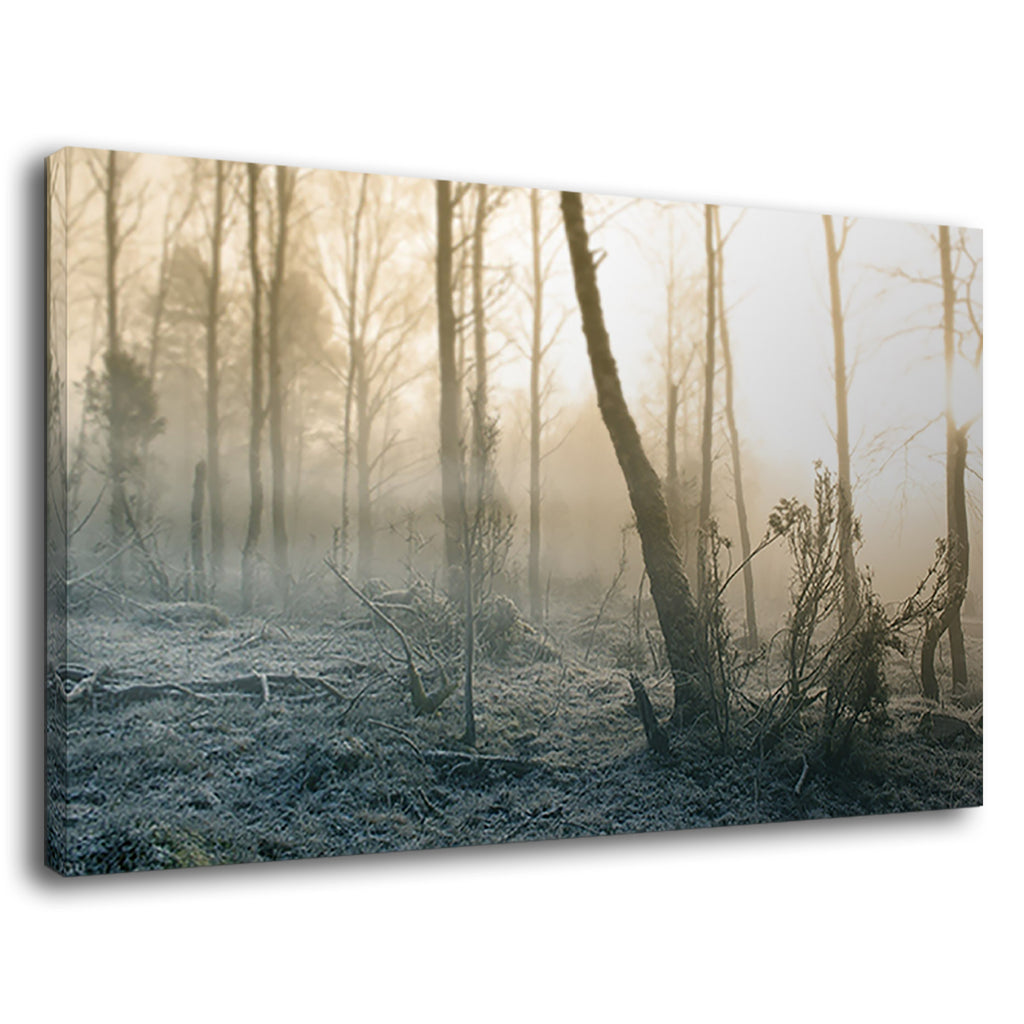 Misty Morning In Foggy Forest For Living Room