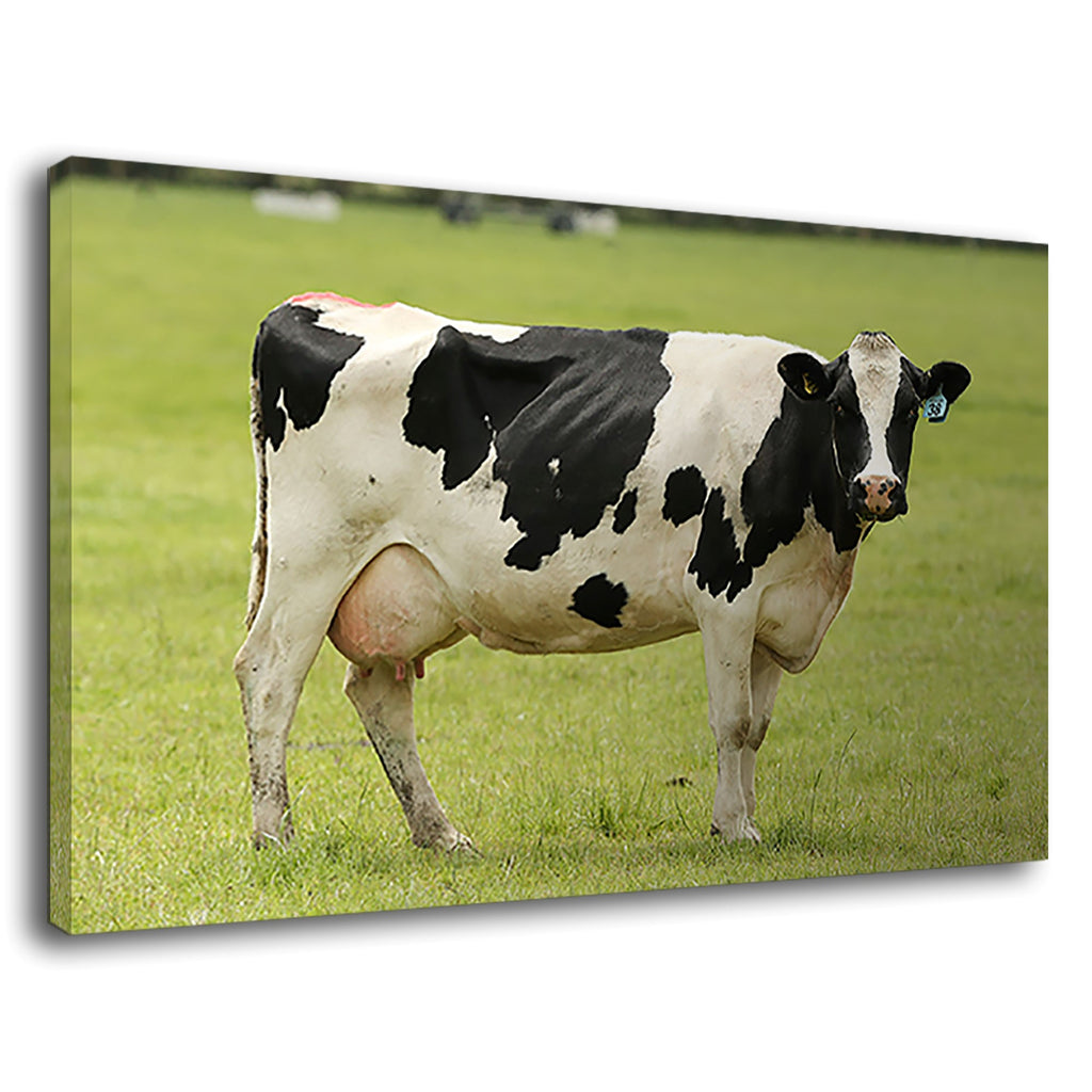 Beautiful Black & White Cow For Drawing Room