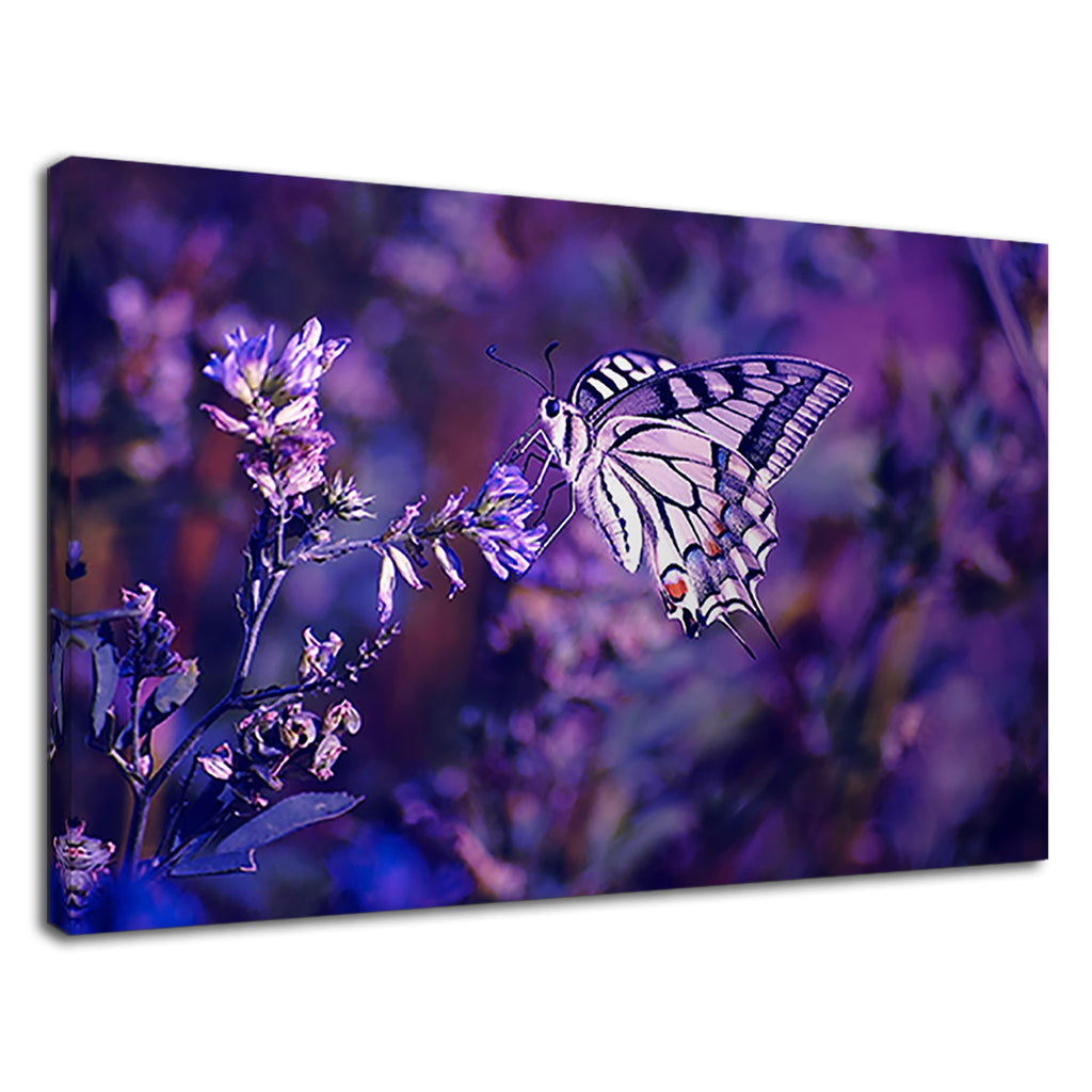 Butterfly On Purple Lavender For Drawing Room