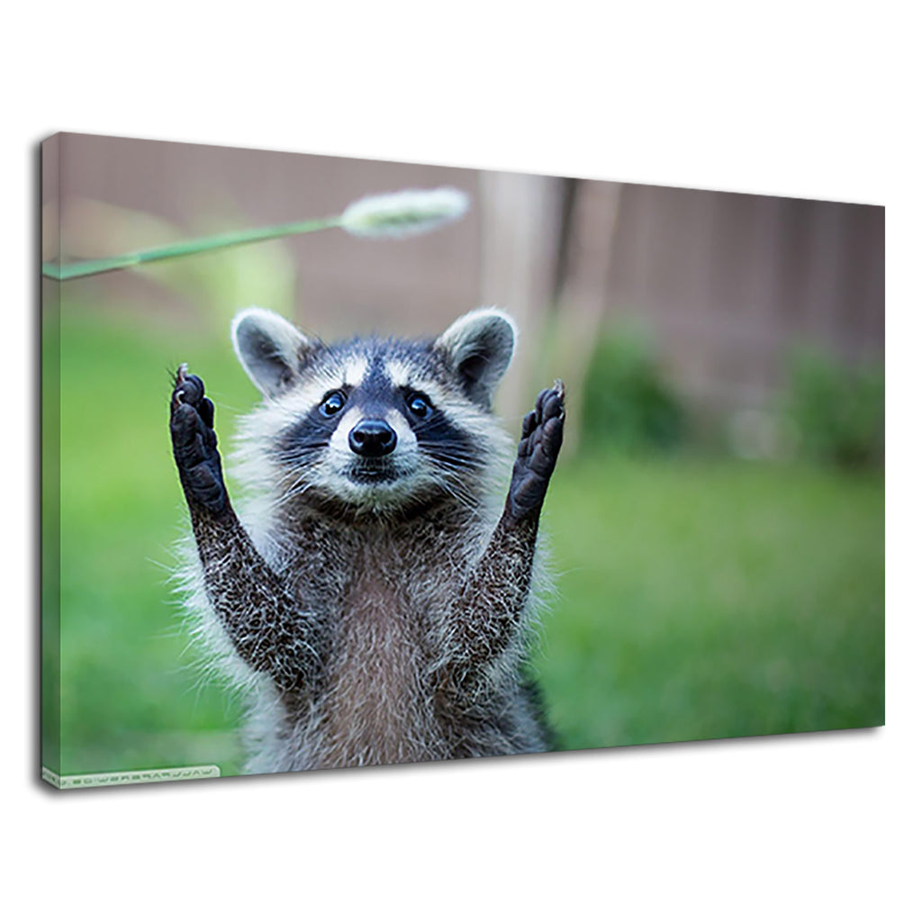 Funny Raccoon Stretching Hands For Kids Bathroom