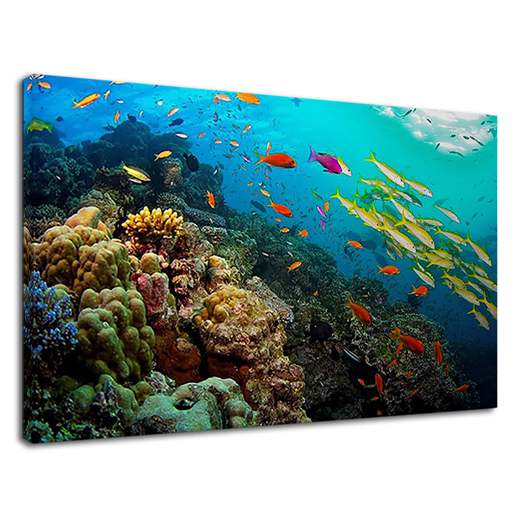 Great Barrier Reef Marine Life For Drawing Room