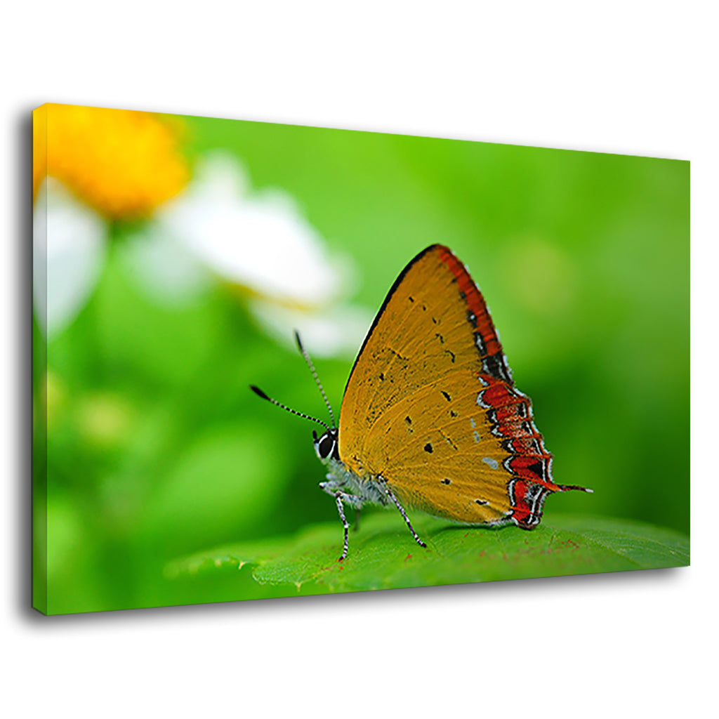 Beautiful Butterfly Dancing On Flower For Bedroom