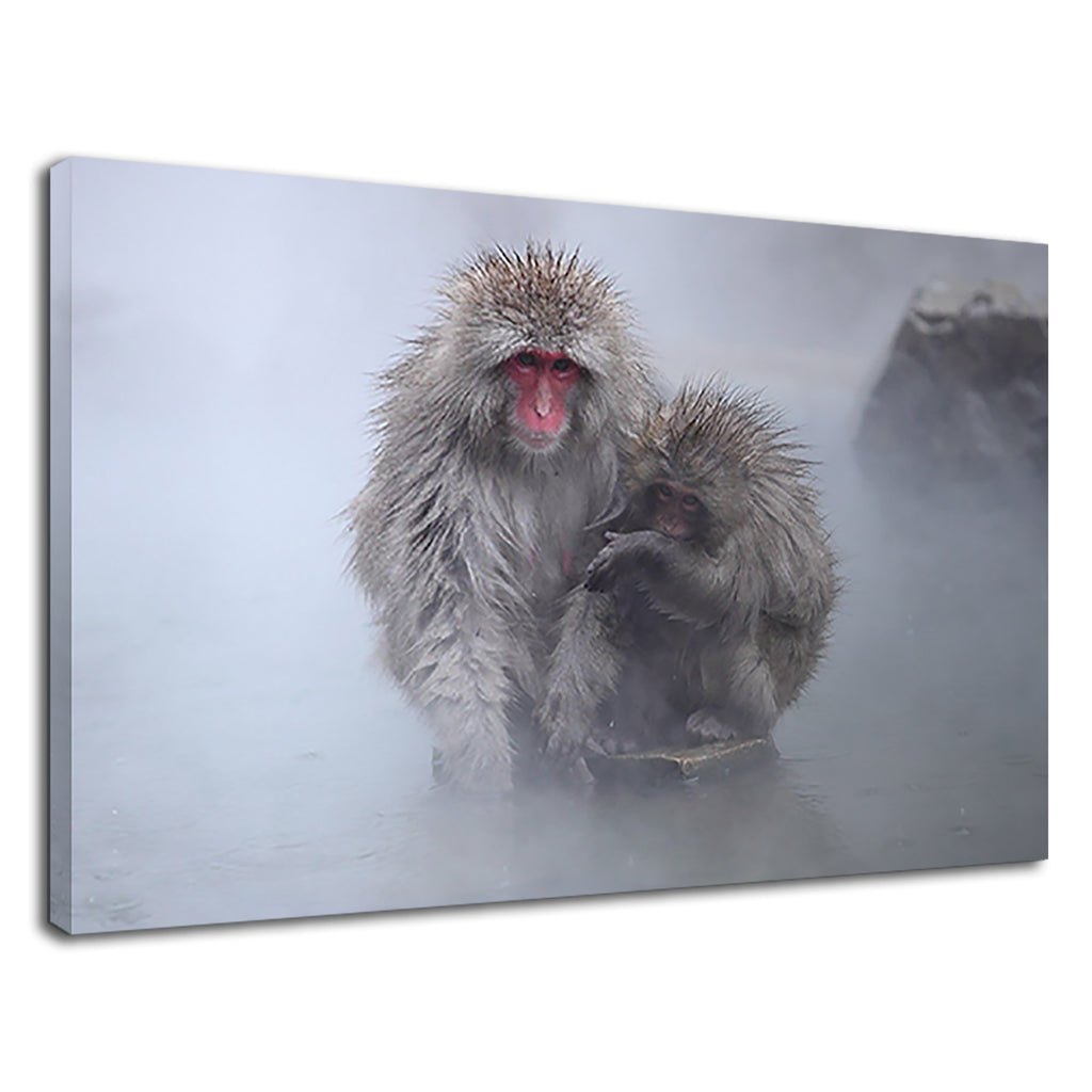 Japanese Snow Monkey With Baby For Drawing Room