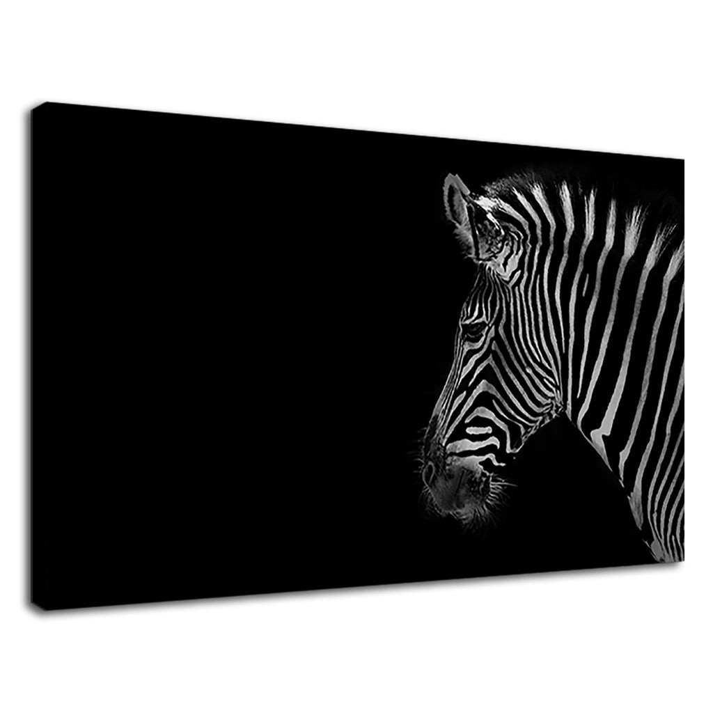 Beautiful Black And White Zebra Safari Photography