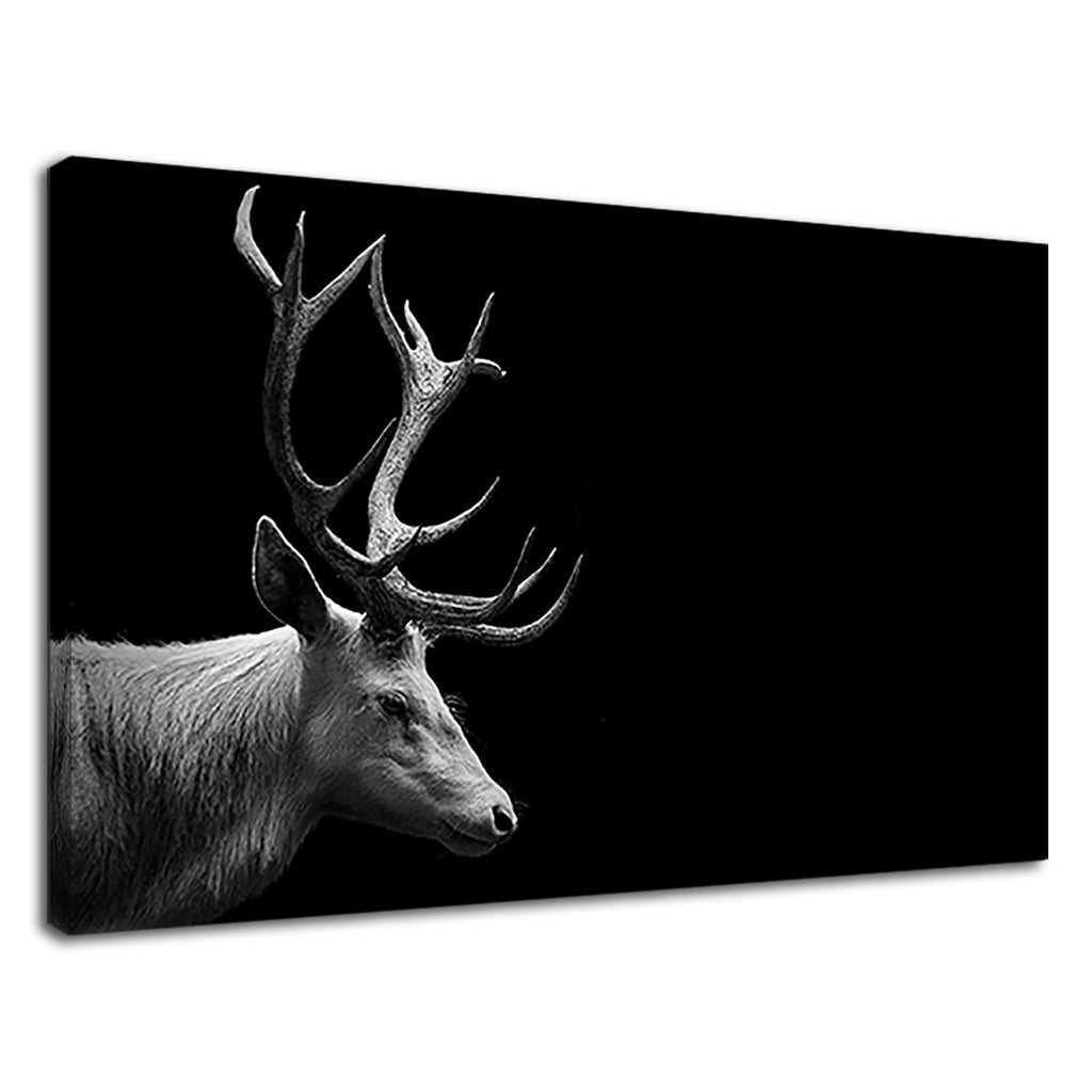Beautiful Black And White Stag Majestic Wildlife
