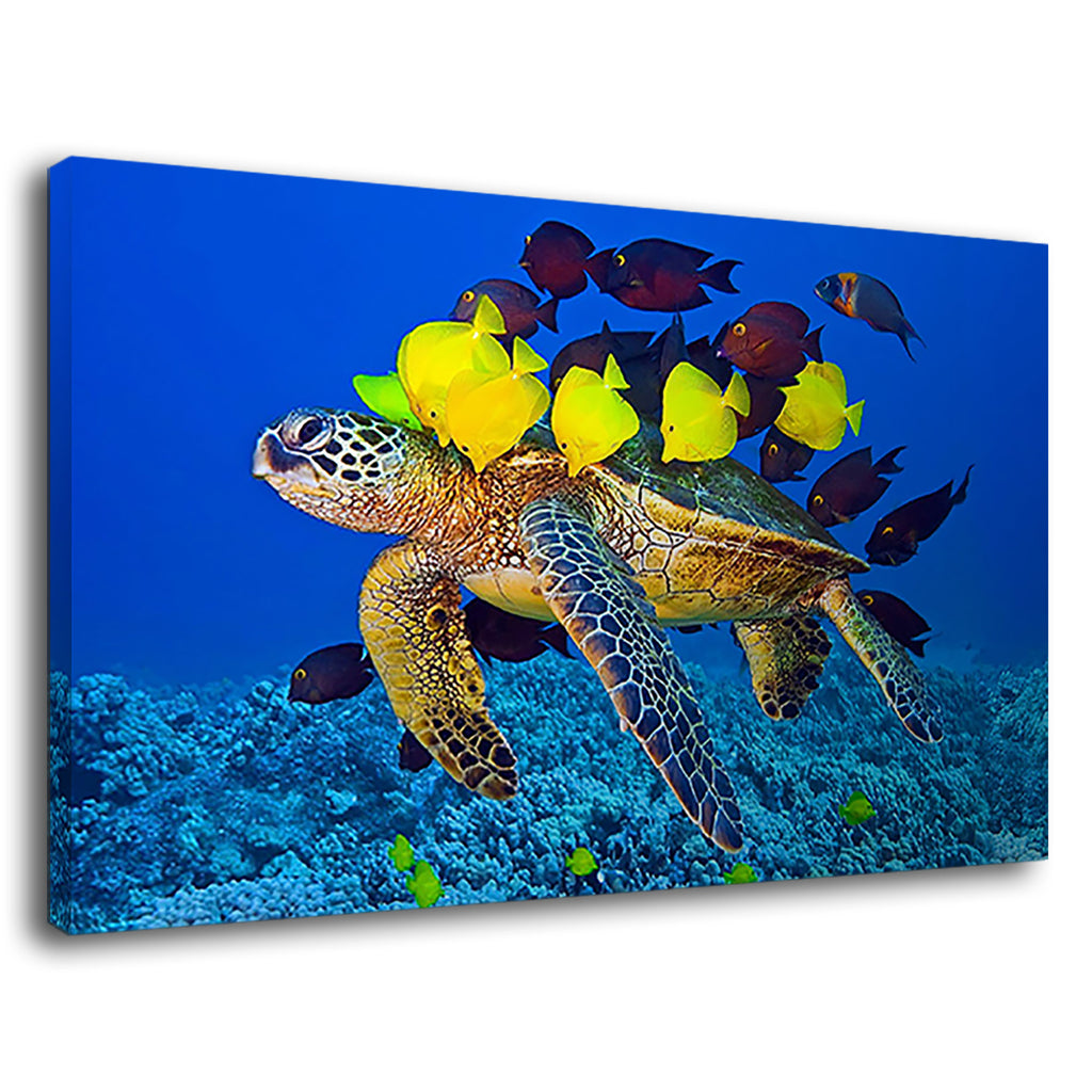 Sea Turtle And Tropical Fishes Marine Photography