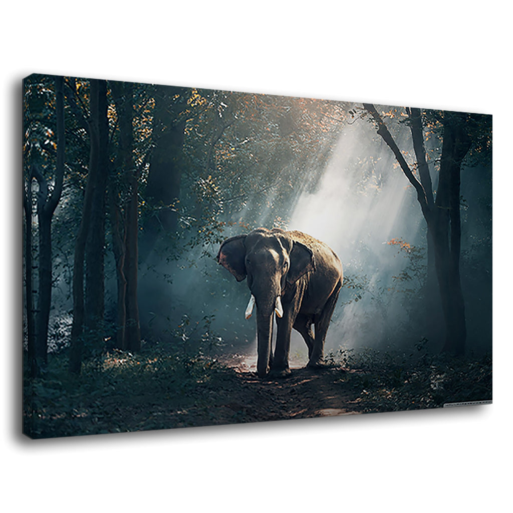 Elephant In Forast Jungle Rays Of Sunshine Dream