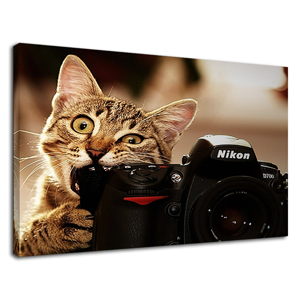 Funny Photographer Cat Playing With Camera