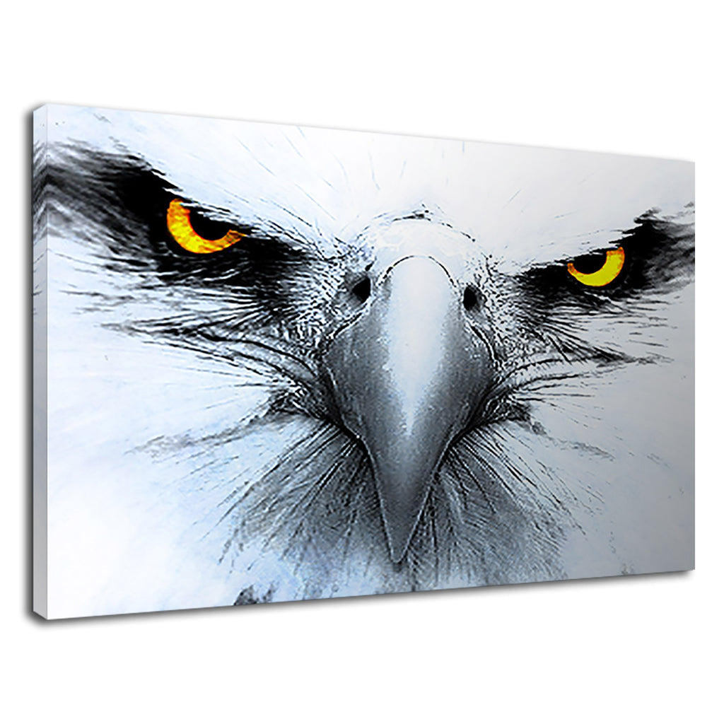 Yellow Eyed White Eagle Gaze Wildlife Bird