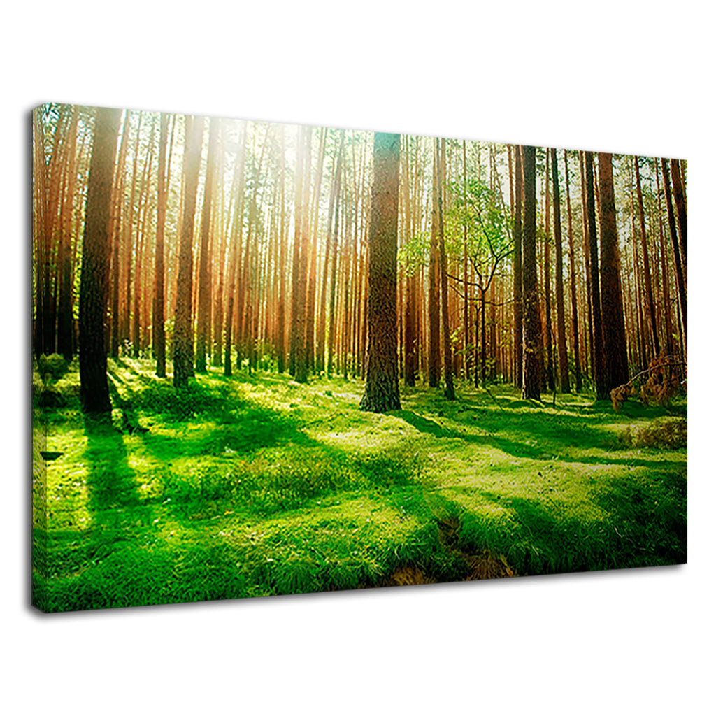 Stunning Scenic Forest Mighty Trees Green Moss