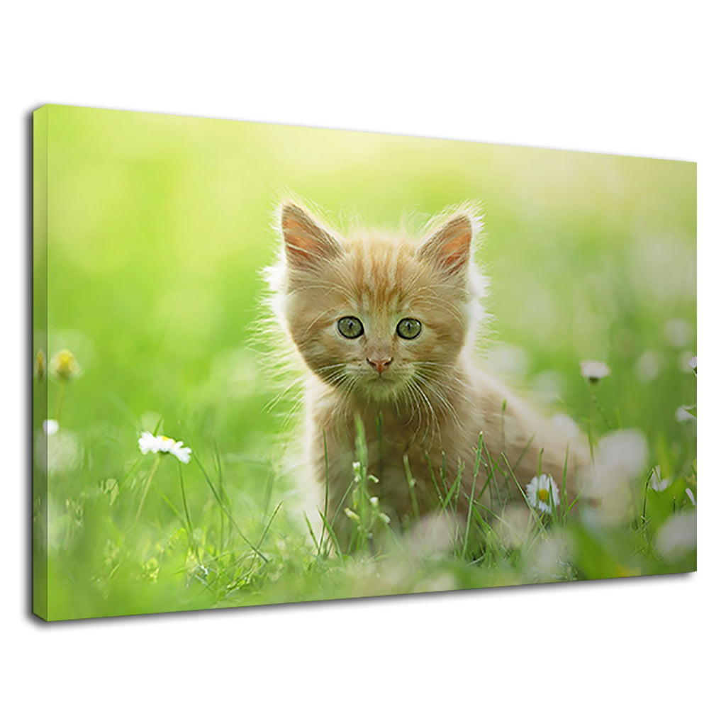 Cute Baby Kitten Strawberry Blonde In The Meadow