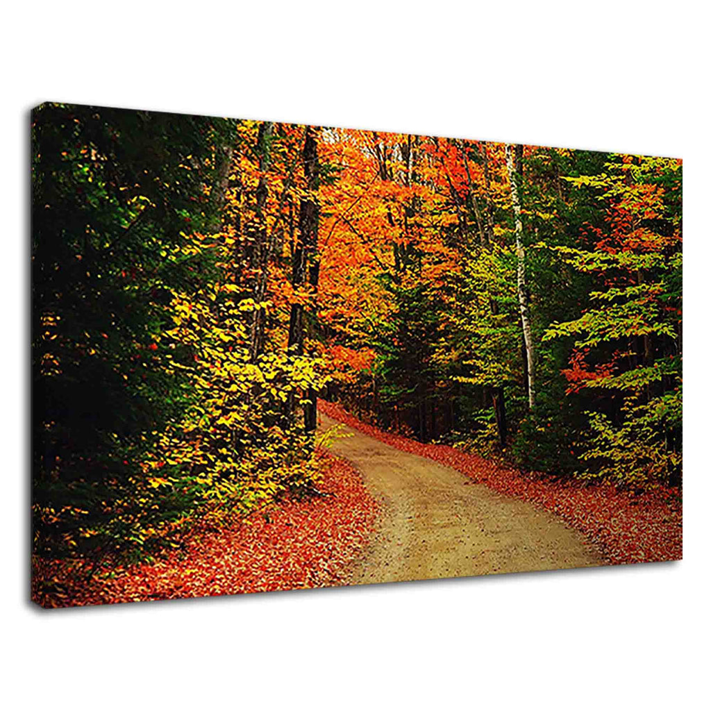 Charming forest road covered with fallen leaves