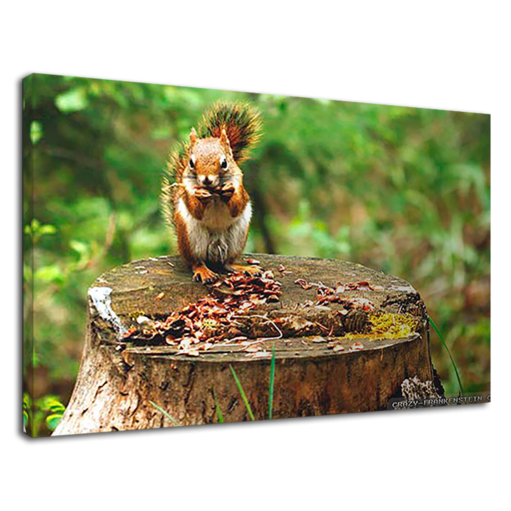 British Native Red Squirrel Spring Animal