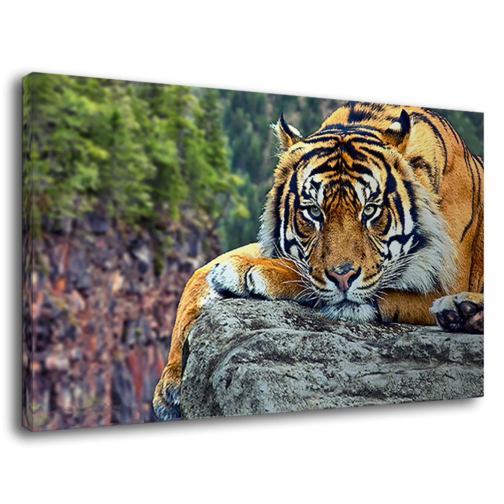Tiger Lying On The Rock Wild Life Animal Predator
