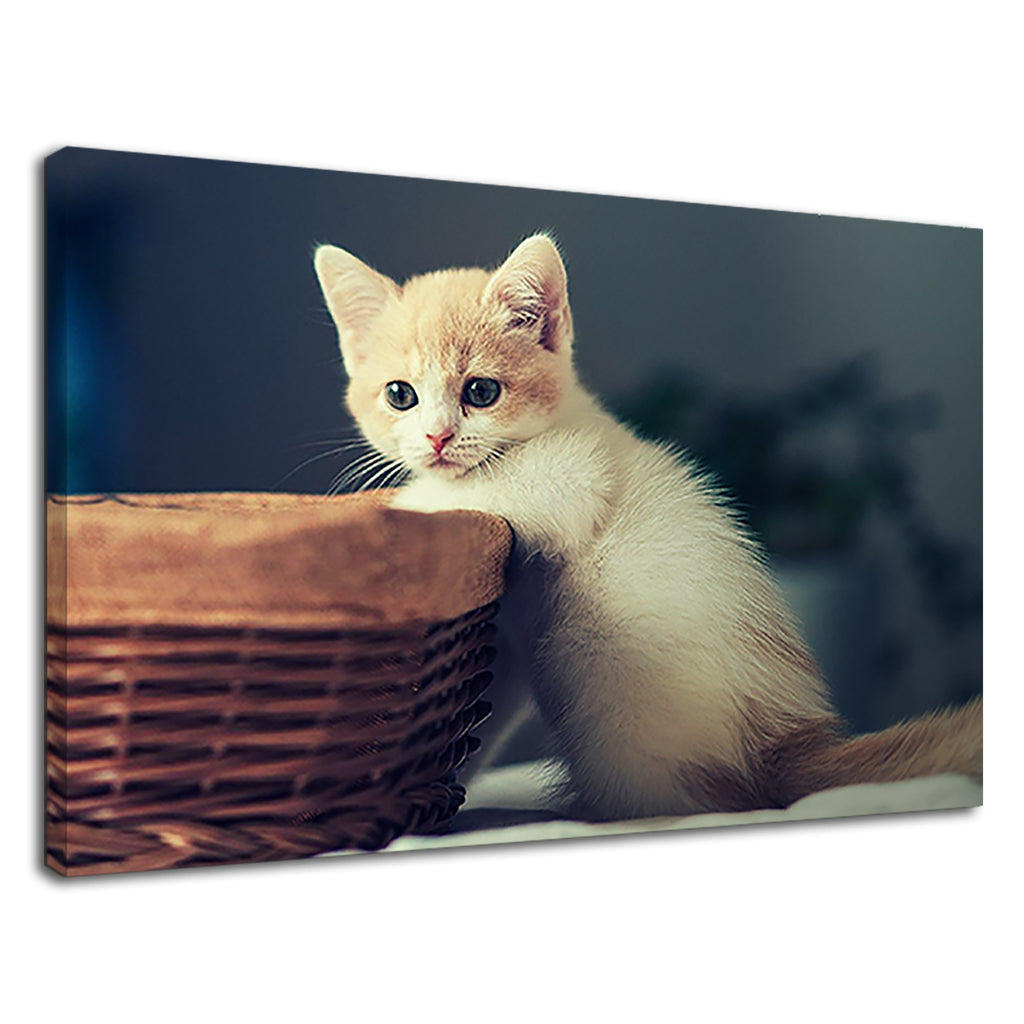 Cute Kitten Basket Cat Lovers