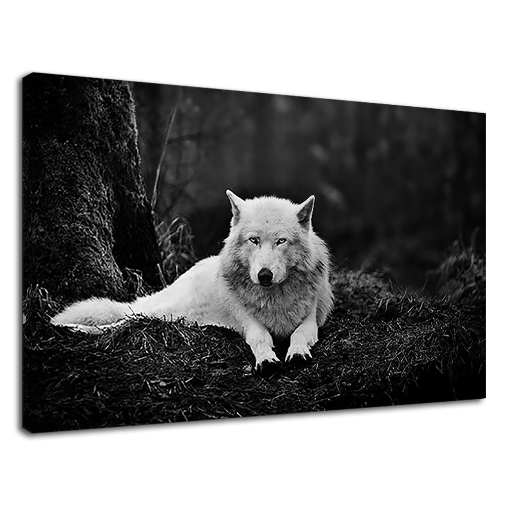 Black And White Snow Wolf Stunning Wildlife