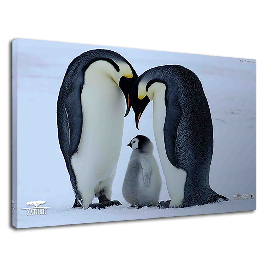 Beautiful Penguin Family For Kids Bedroom